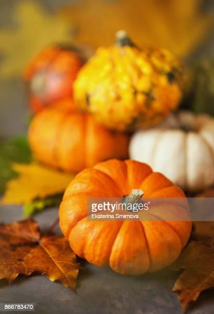 Decorative various autumnal halloween pumpkins