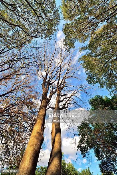 dedicious trees above in autumn - emreturanphoto bildbanksfoton och bilder
