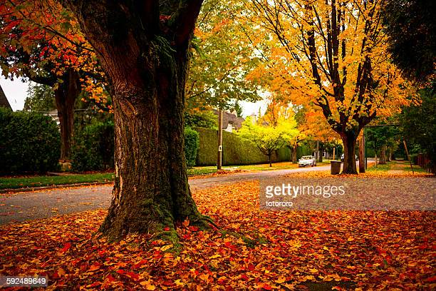 Deep Autumn in Vancouver BC Canada
