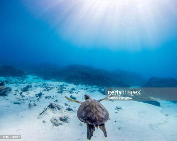 deep blue - pacific ocean stock pictures, royalty-free photos & images