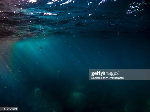 deep blue sea - deep stock pictures, royalty-free photos & images