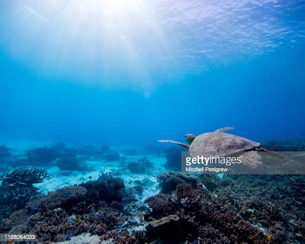 deep blue vibes - great barrier reef stock pictures, royalty-free photos & images