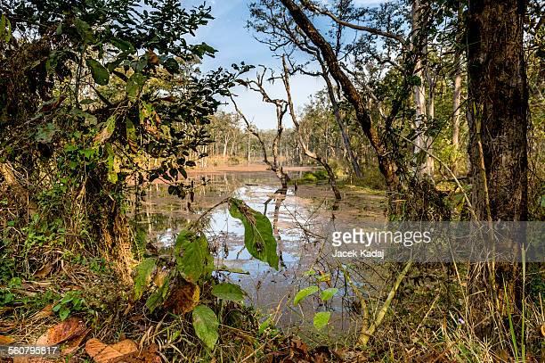 Deep forest in Nepal jungle (Chitwan).