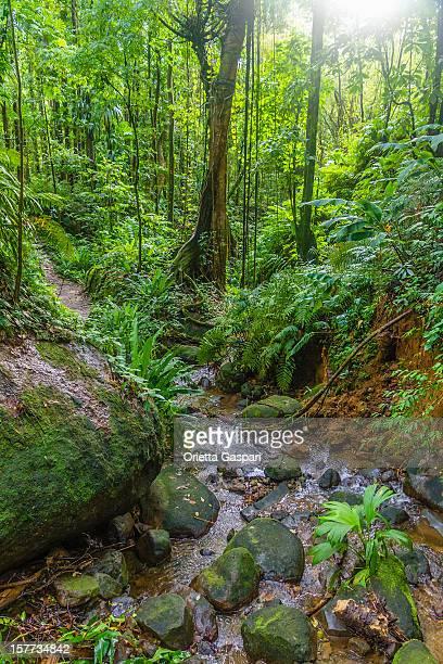 Deep Forest, de Saint Vincent