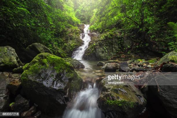 deep forest waterfall - 巨礫 ストックフォトと画像