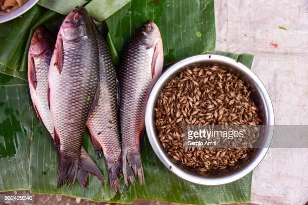 Deep fried edible insects next to fresh river fish in Luang Prabang, Laos