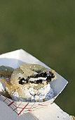 deep fried sandwich cookie