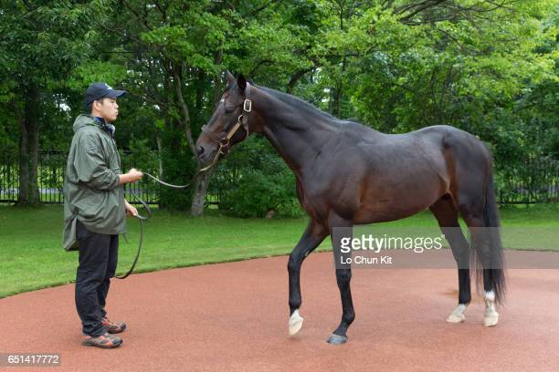 Deep Impact at Shadai Stallion Station in Hokkaido Japan on August 26 2016 Deep Impact is an unbeaten Japanese Triple crown winner