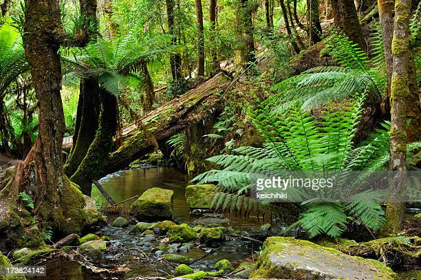 Deep in the rainforest with ferns and stream
