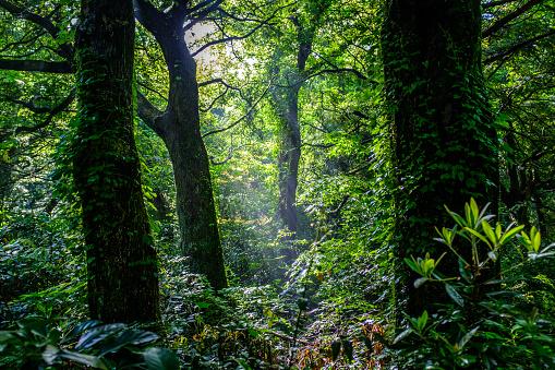 Deep inside the forest - gettyimageskorea