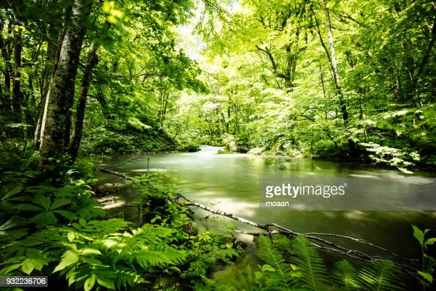 deep into the forest - lush stock pictures, royalty-free photos & images