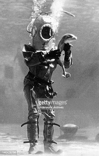 A deep sea diver holds a young porpoise in his hands circa 1933