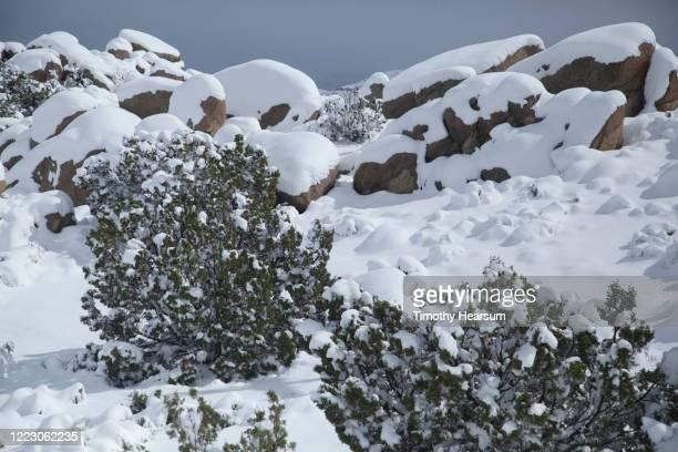 deep snow on juniper bushes and boulders in joshua tree national park - timothy hearsum fotografías e imágenes de stock