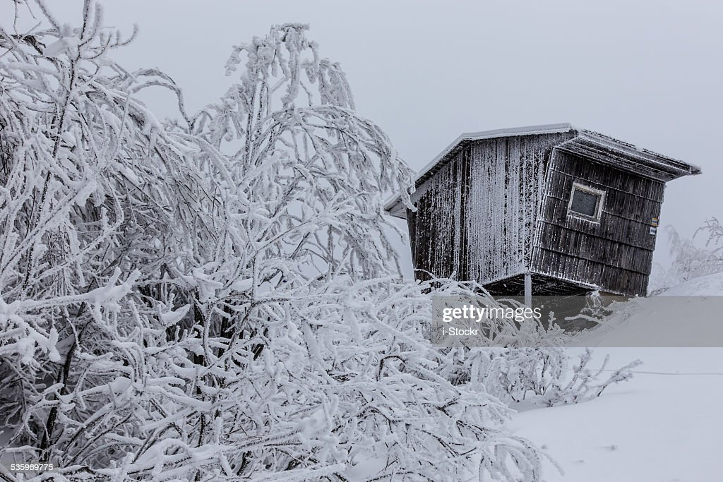 Deep winter : Stock Photo