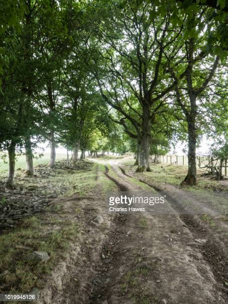 rutted dirt road ストックフォトと画像 getty images