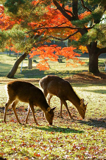 deer and red leaves