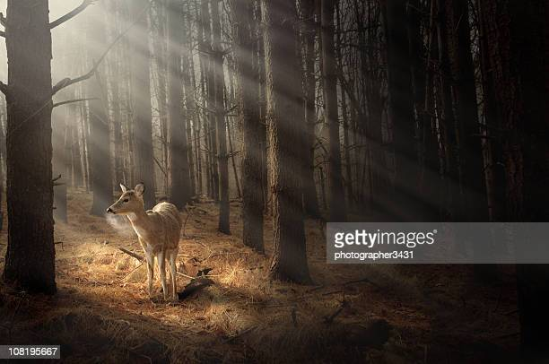 Deer bathing in sunlight