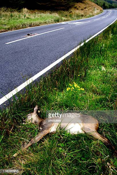 deer by the roadside - death stock pictures, royalty-free photos & images