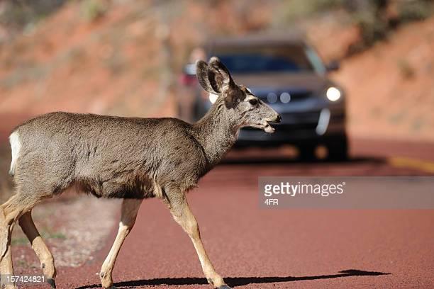 Deer Crossing ein Road