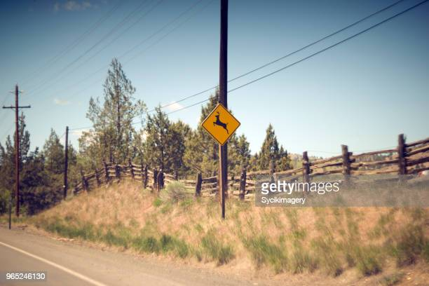 deer crossing road sign along highway - animal crossing stock pictures, royalty-free photos & images