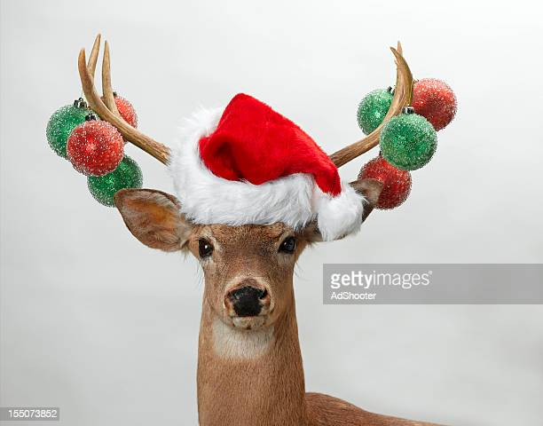 Deer pour Noël