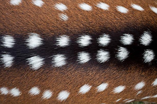 Deer fu texture