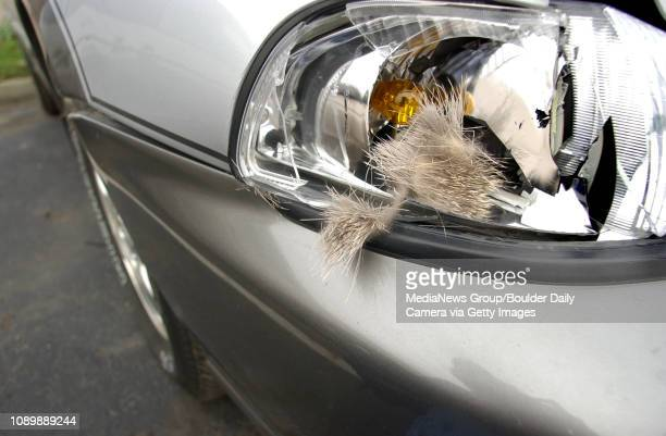 Deer fur is still stuck to the headlight of a Subaru brought into Boulder Bump Shop on Tuesday