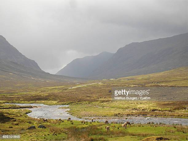Deer Grazing On Field At Scottish Highlands