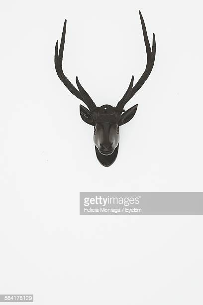Deer Head Against White Background