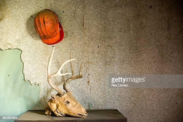 Deer head in abandoned house