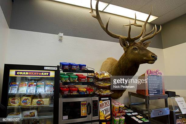 Deer Head in Gas Station Store