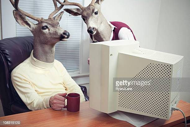 deer head men working at office - bizarre stock pictures, royalty-free photos & images