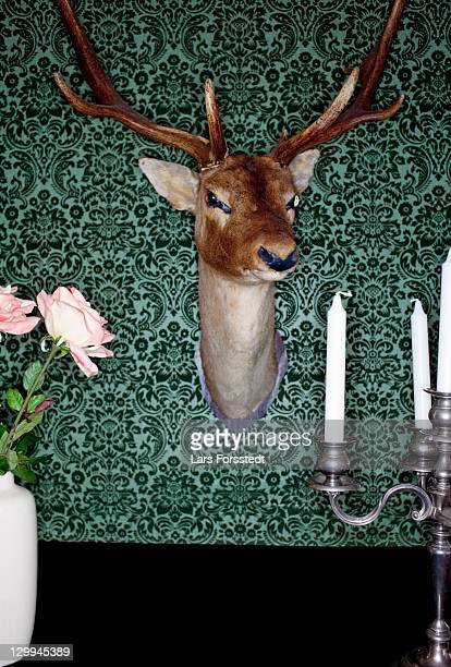 deer head mounted on dining room wall - dead deer stock photos and pictures