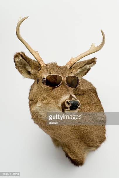 deer head with sunglasses - dead deer stock photos and pictures