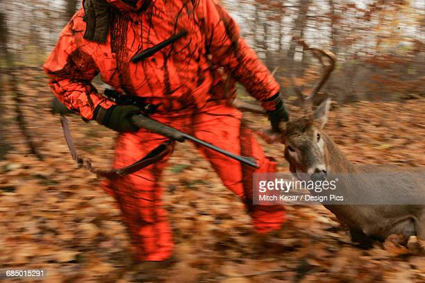 deer hunter dragging dead deer - dead deer stock photos and pictures