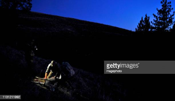 deer hunters gutting a deer at night, john day, oregon, usa - dead deer stock photos and pictures