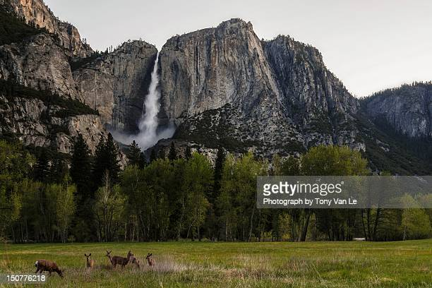 Deer in front of Upper Yosemite Falls