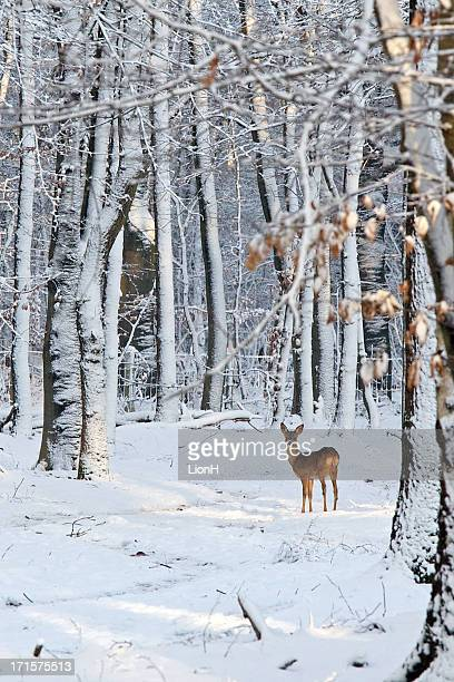 Deer in snow-covered forest