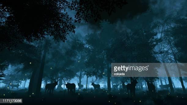 夜の森の中の鹿 - グローワーム ストックフォトと画像