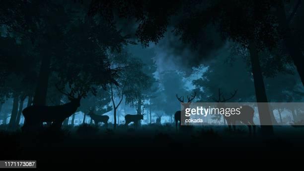 deer in the night forest - animals in the wild imagens e fotografias de stock