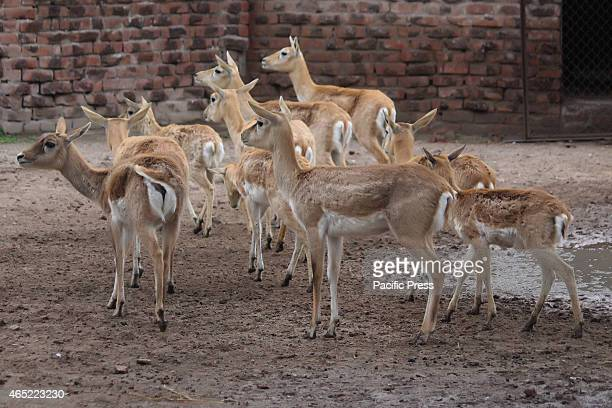 A deer in the zoo Animals are seen in Lahores ZOO in World Wildlife Day The General Assembly takes note of the outcome of the 16th Conference held in...