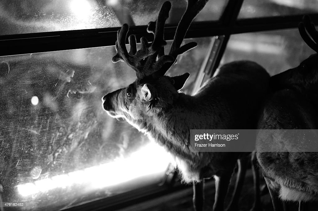 A Deer Is Seen During Spike Tv S Guys Choice 2015 At Sony