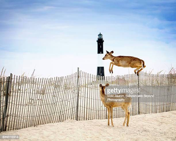Deer Jumping Over the Fence with Lighthouse in Background at Fire Island