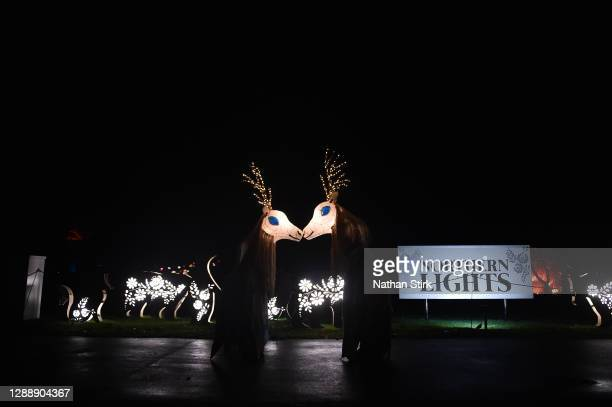 Deer lanterns look on during the rehearsals of Chester Zoo light trail festival called 'The Lanterns' at Chester Zoo on December 01, 2020 in Chester,...