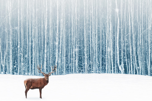 Deer male with big horns in the winter snowy forest. Winter natural background. Christmas artistic image. 1044037004