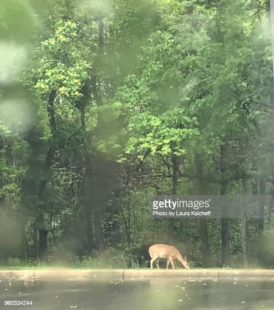 Deer on a Rainy Day