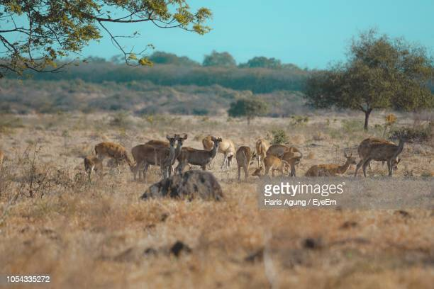 deer on field against sky - herbivorous stock pictures, royalty-free photos & images