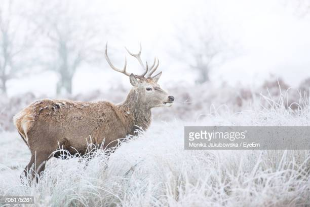 deer on field against sky - stag stock pictures, royalty-free photos & images