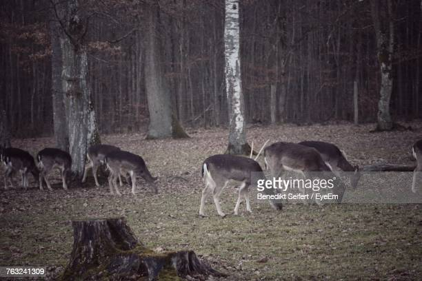 Deer On Grassy Field Against Trees At Forest
