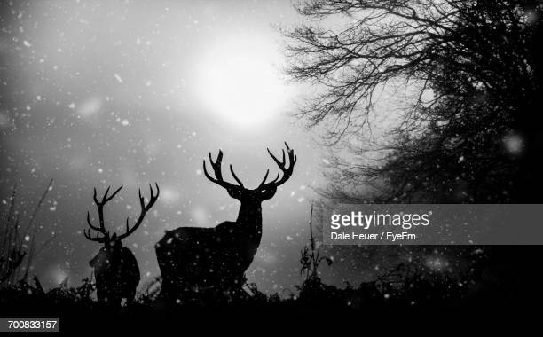 Deer On Landscape Against Sky In Forest